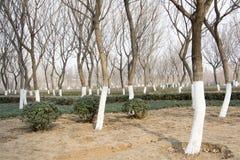Il legno delle foglie di un albero Immagine Stock Libera da Diritti