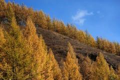 Il legno di autunno Immagine Stock Libera da Diritti