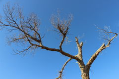 Il legno di autunno Fotografie Stock Libere da Diritti