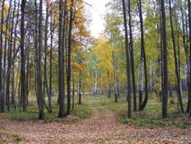 Il legno di autunno La Russia, Tatarstan, villaggio di alta montagna Immagini Stock