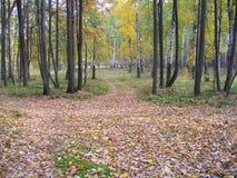 Il legno di autunno La Russia, Tatarstan, villaggio di alta montagna Fotografia Stock