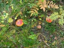 Il legno di autunno La Russia, Tatarstan, villaggio di alta montagna Immagini Stock Libere da Diritti