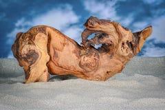 Il legno di Mopani su di colore chiaro insabbia con cielo blu nel fondo Fotografia Stock