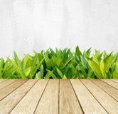 Il legno di prospettiva sopra l'albero verde rimane il cemento bianco murare il fondo Fotografia Stock
