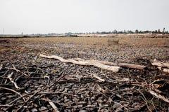 Il legno di si asciuga su suolo arido fotografia stock libera da diritti