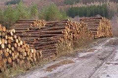 Il legno impilato ha tagliato il mucchio a pezzi dei tronchi di alberi nella regione selvaggia del terreno boscoso della foresta  immagini stock libere da diritti