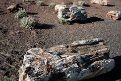 Il legno petrificato sulla sabbia con sfrega la spazzola nei precedenti fotografia stock