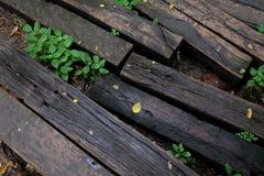 Il legno registra la struttura della piastrella per pavimento immagini stock