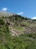 Il legno segue l'altopiano Altai immagine stock