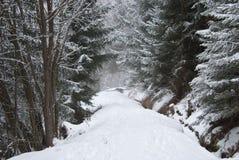 Il legno in un giorno di inverno Fotografie Stock Libere da Diritti