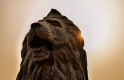 Il leone di urlo Immagini Stock