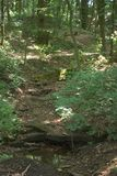 Il letto di insenatura asciutto che passa un sole ha chiazzato la foresta e sopra un punto dell'arenaria Fotografia Stock Libera da Diritti