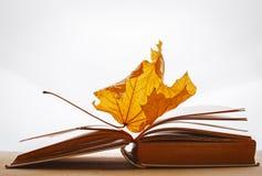 Il libro impagina le foglie gialle del concetto di autunno Fotografia Stock Libera da Diritti