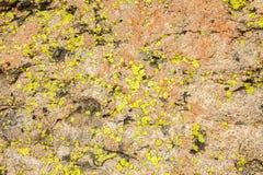 Il lichene ha coperto la roccia Immagini Stock Libere da Diritti