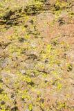 Il lichene ha coperto la roccia Fotografie Stock