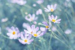 Il lillà fiorisce delicatamente l'universo su un fondo del turchese nel giardino Fotografia Stock