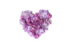 Il lillà fiorisce il cuore isolato Priorità bassa bianca Immagini Stock Libere da Diritti