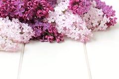 Il lillà fiorisce il mazzo Fotografia Stock Libera da Diritti