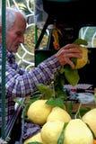 Il limone di Sorrento fotografia stock libera da diritti