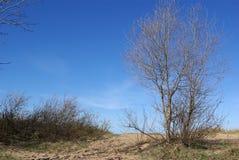 Il litorale del golfo finlandese immagini stock libere da diritti