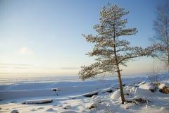 Il litorale del Mar Baltico Immagini Stock