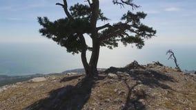 Il litorale della città di Jalta, vista dalla montagna colpo La Crimea Vista su Jalta e la costa di Mar Nero da stock footage