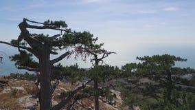 Il litorale della città di Jalta, vista dalla montagna colpo La Crimea Vista su Jalta e la costa di Mar Nero da archivi video
