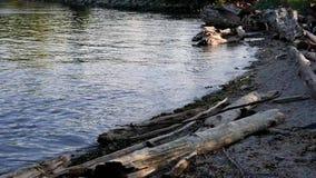 Il litorale roccioso dell'orizzonte del centro di Vancouver stock footage