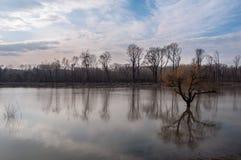 Il livello dell'alta marea del fiume e degli alberi sommersi Fotografia Stock