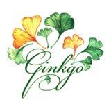 Il logo con le foglie del ginkgo biloba watercolor illustrazione di stock