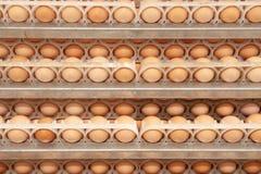 Il lotto delle uova sul vassoio dai selezionatori coltiva immagini stock libere da diritti