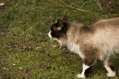 Il lui-gatto Immagini Stock