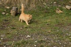 Il lui-gatto Fotografie Stock Libere da Diritti