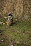 Il lui-gatto Fotografia Stock Libera da Diritti