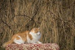 Il lui-gatto Immagine Stock Libera da Diritti