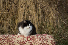 Il lui-gatto Immagine Stock