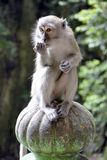 Il macaco alle scale che conducono a Batu scava Fotografie Stock
