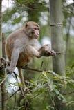 Il macaco si siede sull'albero e guarda qualcosa Fotografia Stock Libera da Diritti