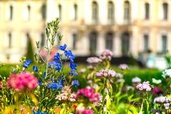 Il macro colpo di fioritura l'estate e della primavera blu, rosa, rosse fiorisce in giardino botanico davanti al castello immagini stock libere da diritti