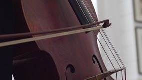 Il macro dettaglio dello strumento musicale, violoncellista gioca sulle corde con attraverso un arco video d archivio