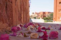 Il macro primo piano del fiore di ciliegia caduto fiorisce sulla terra dell'asfalto Fotografia Stock Libera da Diritti