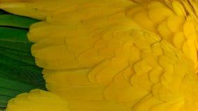 Il macro primo piano di un ` s del pappagallo mette le piume a fotografia stock libera da diritti