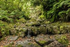 Il Madera verde Foresta tropicale nelle montagne sull'isola del Madera Immagine Stock Libera da Diritti