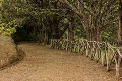 Il Madera verde Foresta tropicale nelle montagne sull'isola del Madera Fotografie Stock Libere da Diritti