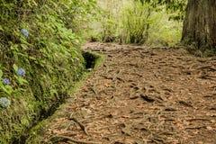 Il Madera verde Foresta tropicale nelle montagne sull'isola del Madera Fotografia Stock