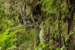 Il Madera verde Foresta tropicale nelle montagne sull'isola del Madera Immagine Stock