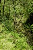 Il Madera verde Foresta tropicale nelle montagne sull'isola del Madera Fotografia Stock Libera da Diritti