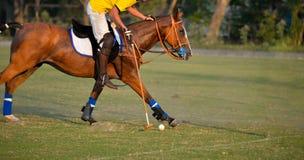 Il maglio di uso del giocatore di polo del cavallo ha colpito la palla di polo Immagine Stock