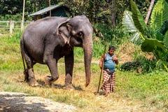 Il Mahout conduce un elefante a lavorare Immagini Stock Libere da Diritti