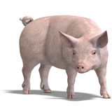 Il maiale rende Immagine Stock